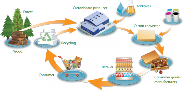 Graphic of The Cartonboard Life Cycle